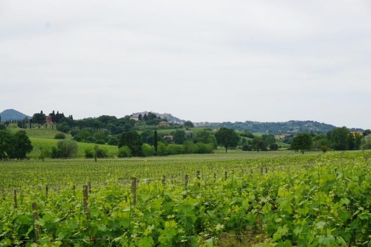 Tuscany (7) (800x533)