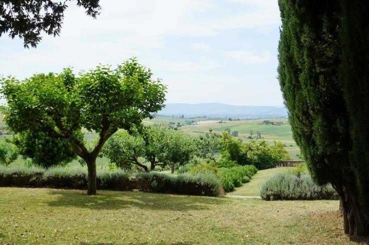 Tuscany (800x533)